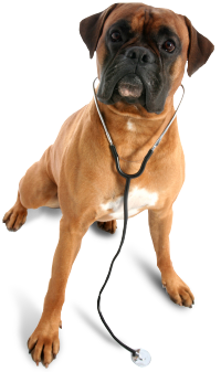 veterinarian_dog